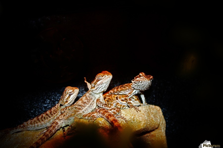 Reptile movie Stars  Print