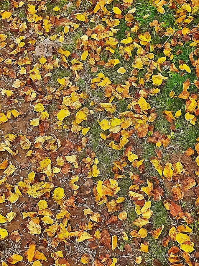 An Autumn Carpet  Print