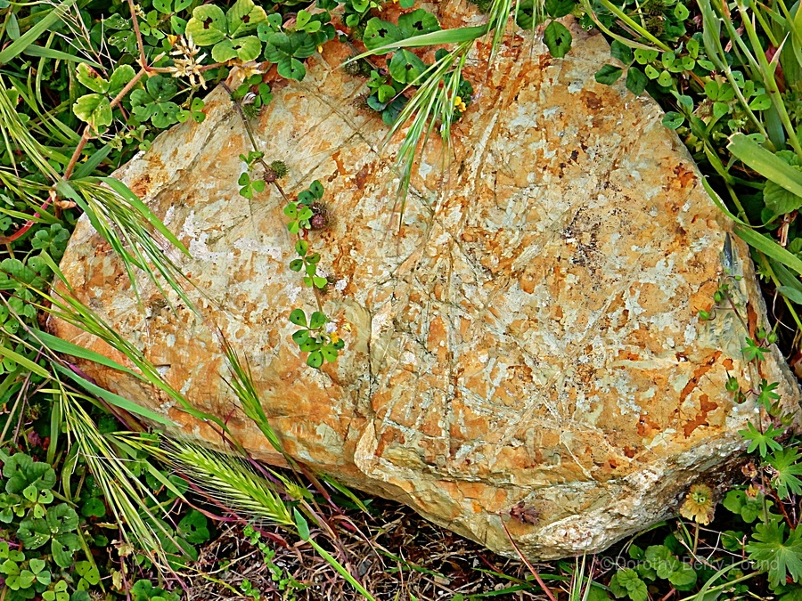 Brown Sandstone Rock With Grass  Print