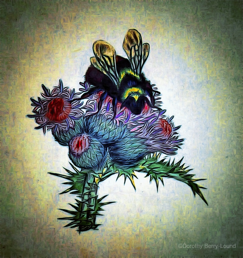 Bumble Bee On Thistle  Print