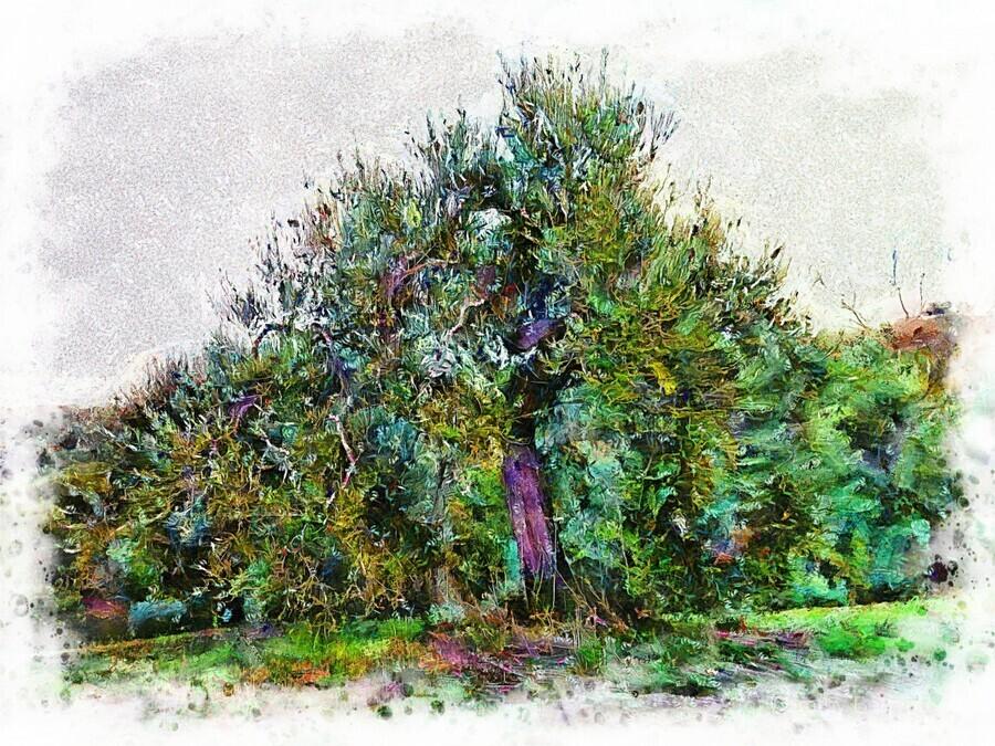 Cascading Olive Tree  Print