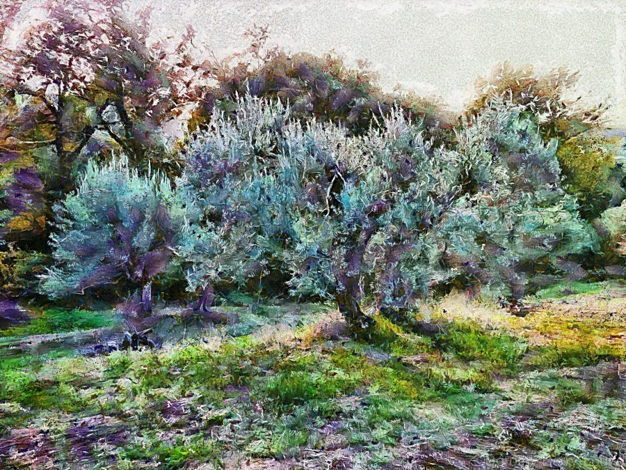 Colorful Olive Grove  Print