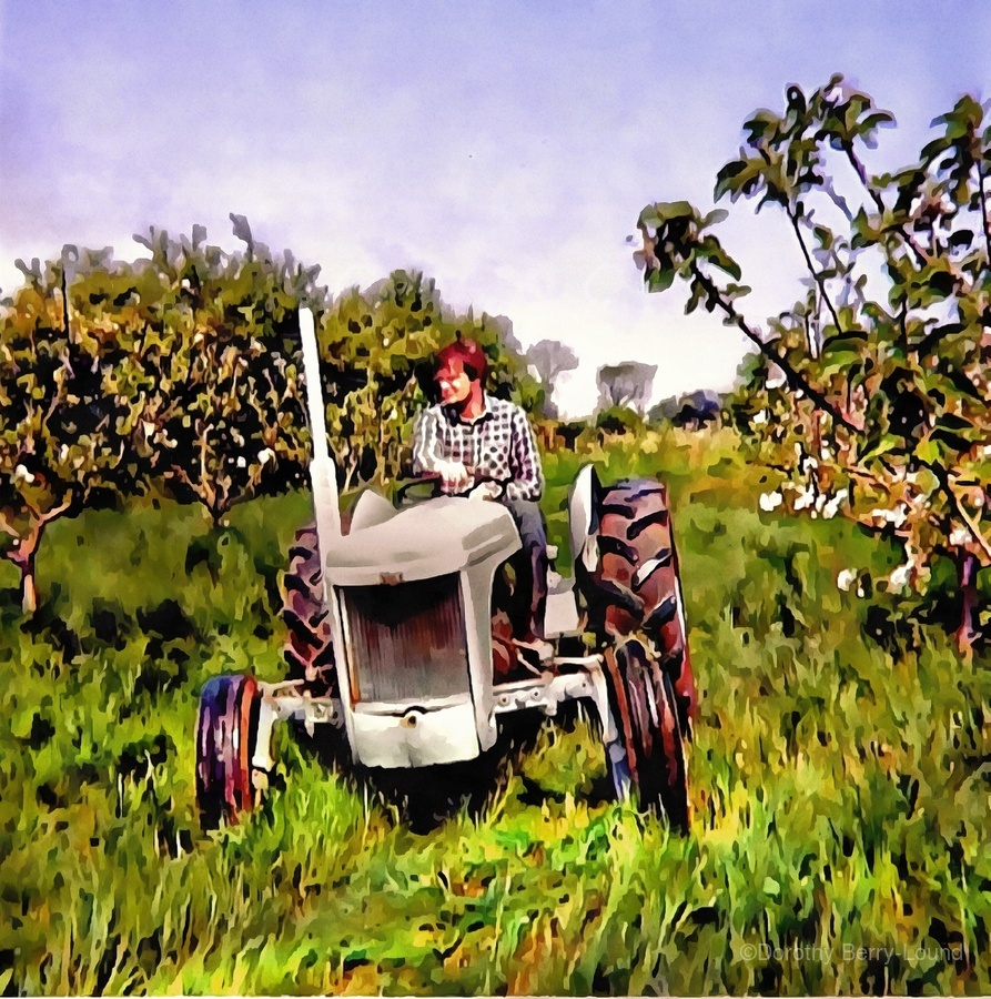 One Man And His Fergie Tractor  Print