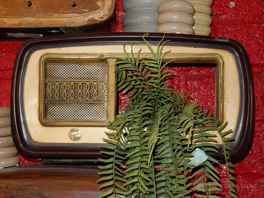 Old Radio Used For Succulent Display  Print