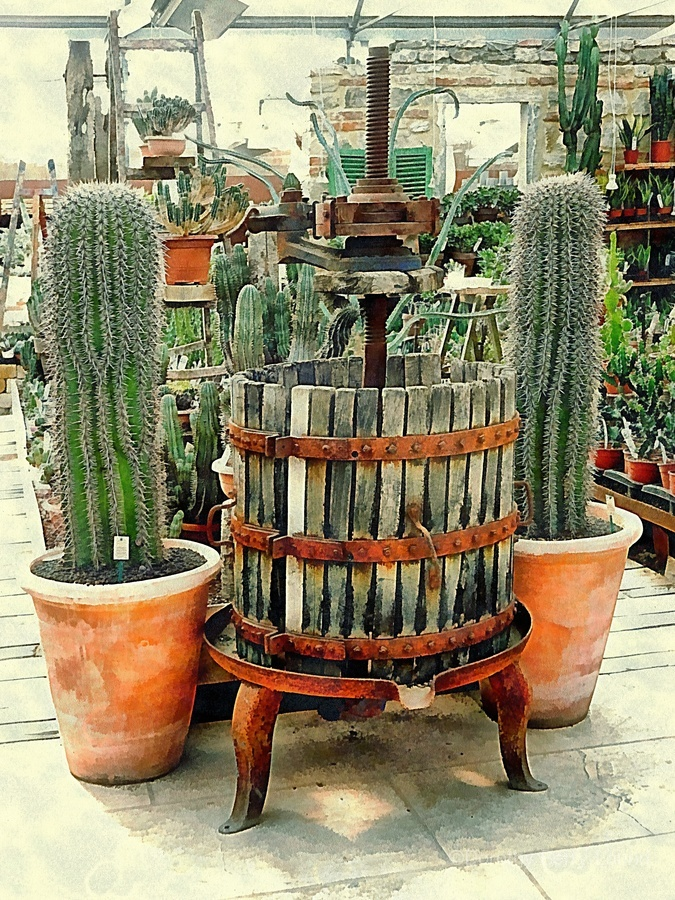 Old Wine Press Used in Succulent Display  Print