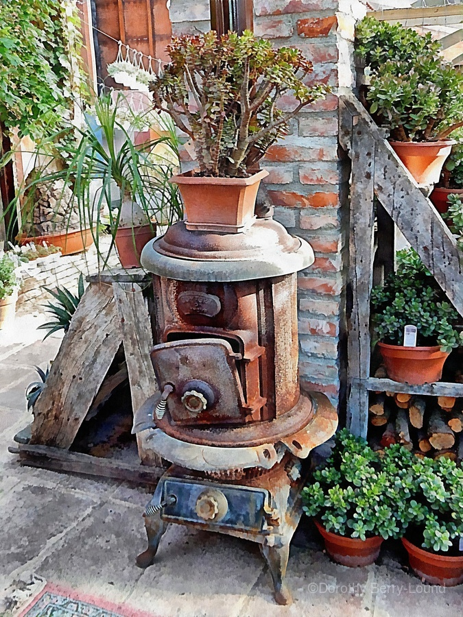 Old Wood Stove With Succulents  Print