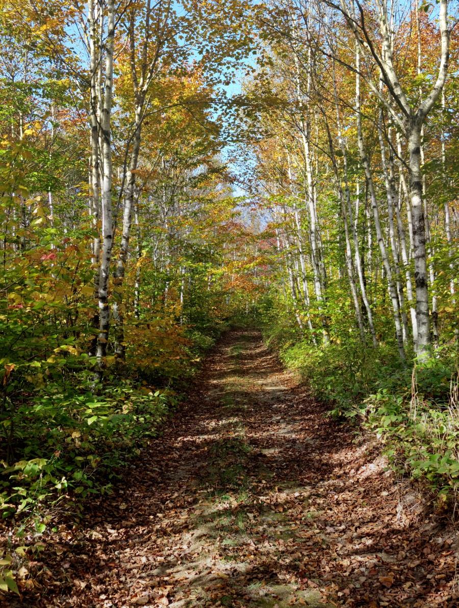 Fall foliage, Mount Pisgah, NB, Oct. 6, 2013  Print