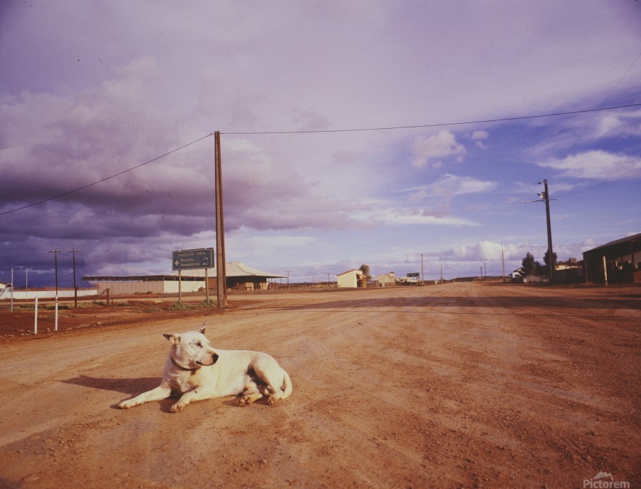 Lone dog in Outback town Australia  Print