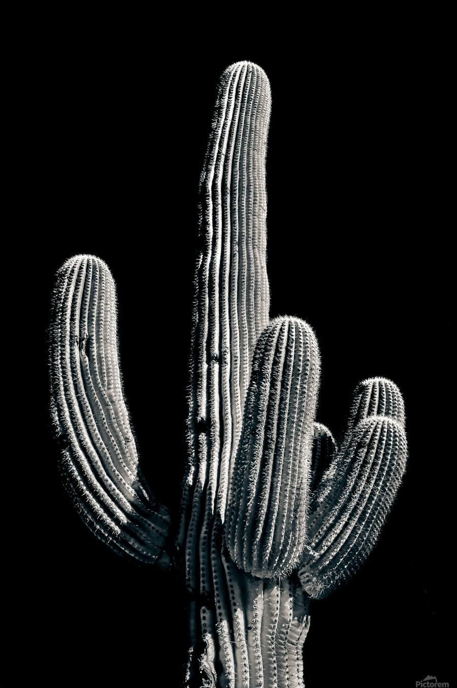Saguaro 3  Print