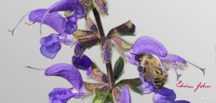 Bees make Honey  Print