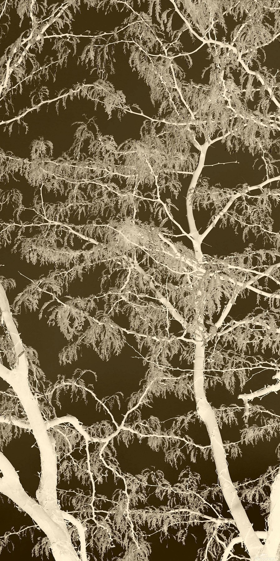 Lacey Sepia Tree middle  Print