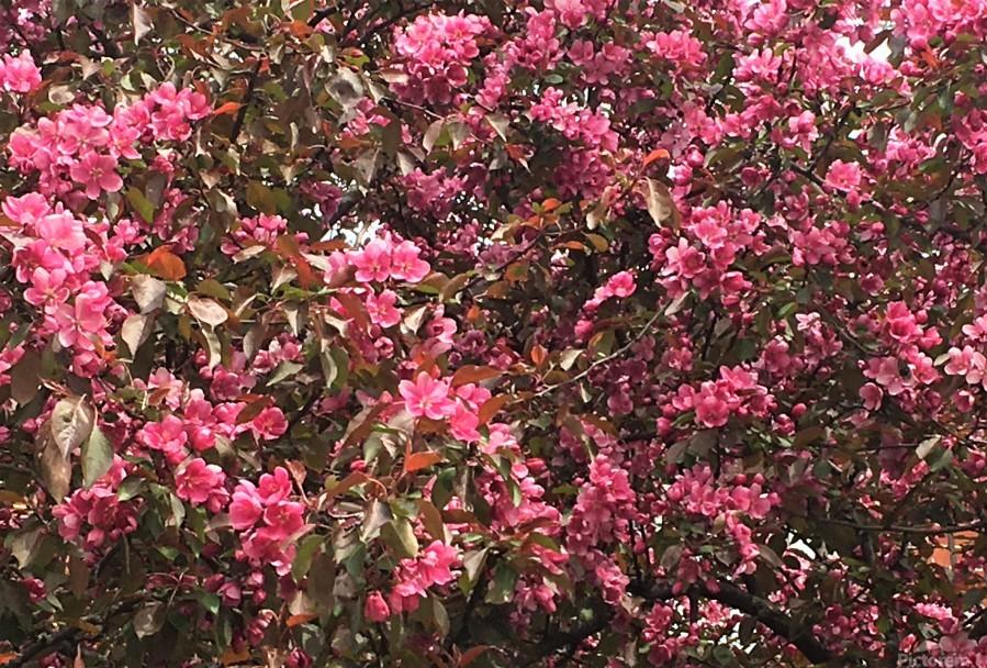 Flowering Tree  Print