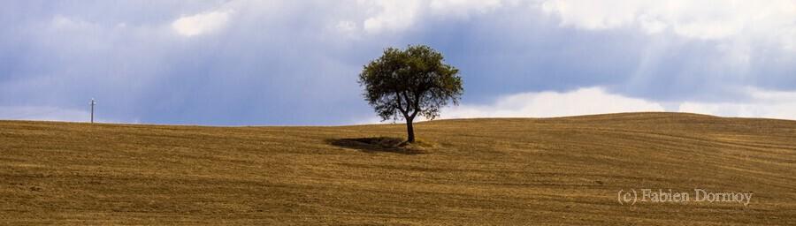 Tuscany Tree  Print