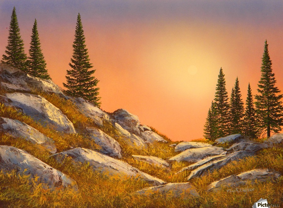 Sunset Spruces  Print