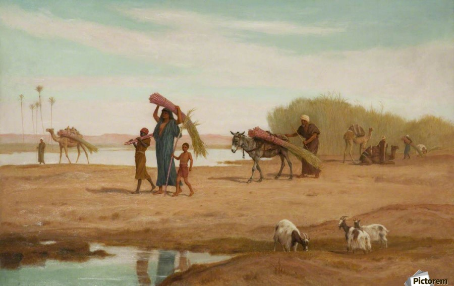 Getting in the Sugar Cane, River Nile  Print