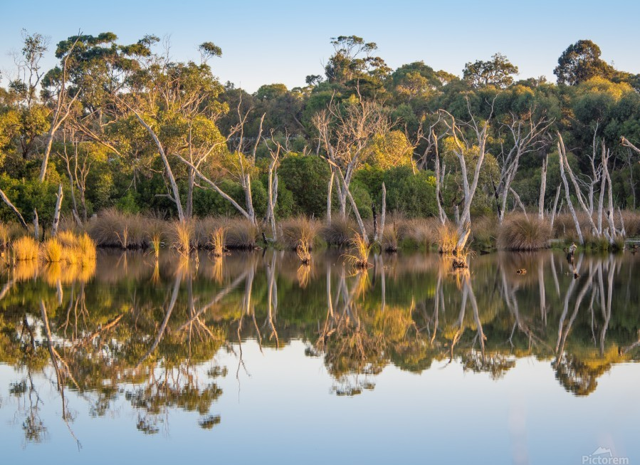 Evening river bank with glassy reflection  Print