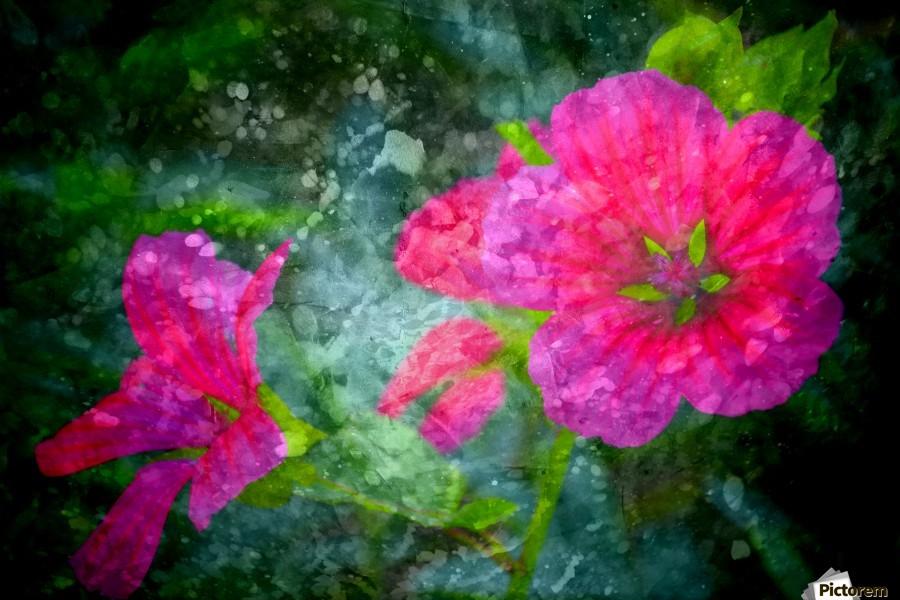 Fleurs d'artifices  Print