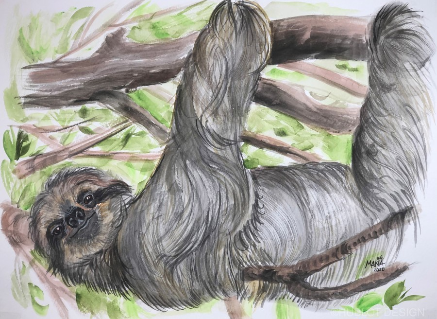Collection COSTA RICA-Sloth  Imprimer