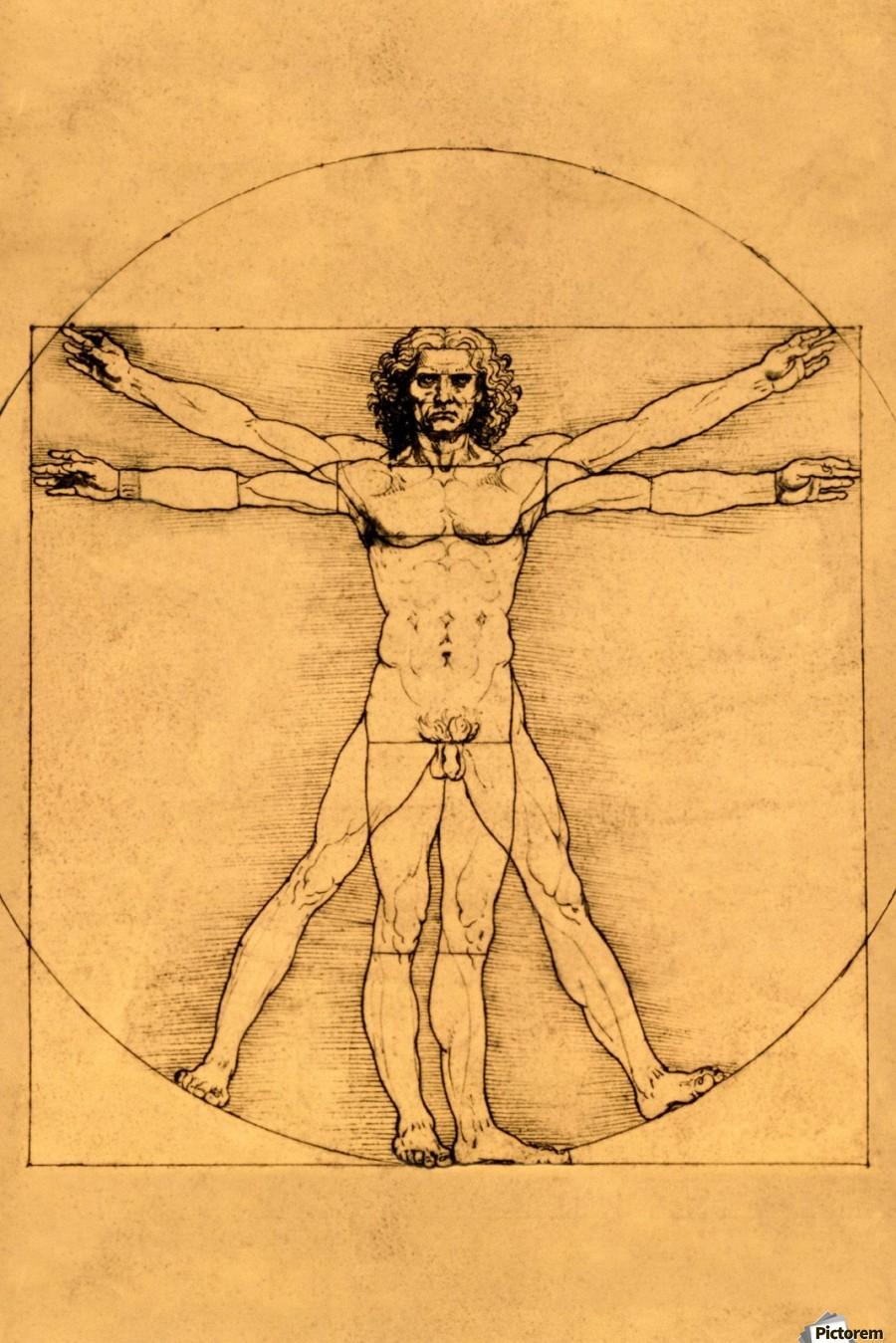 Human Body Leonardo Da Vinci Canvas