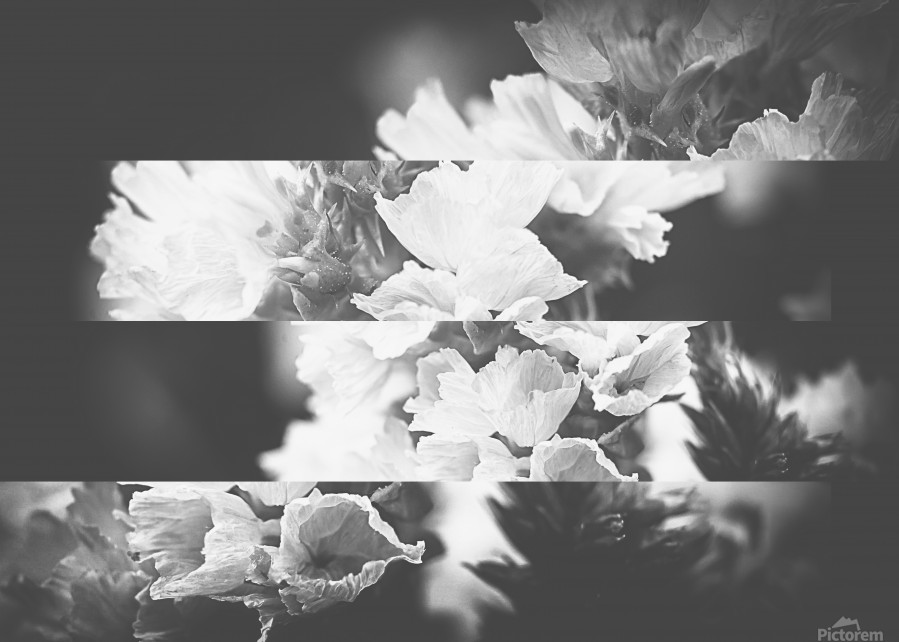 Flower Bells Collage BnW  Print