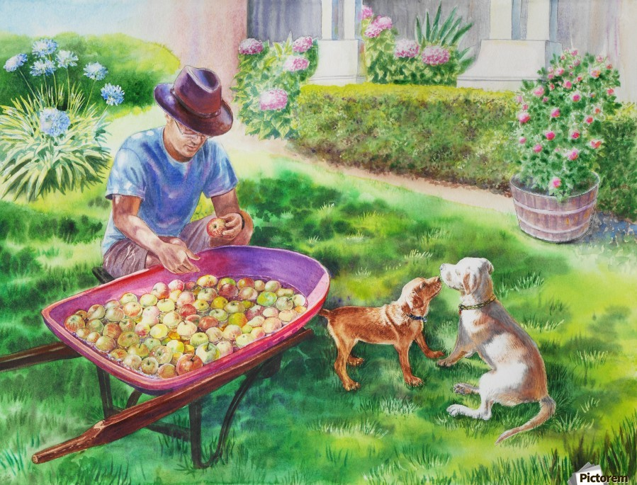 Apples Harvest  Print