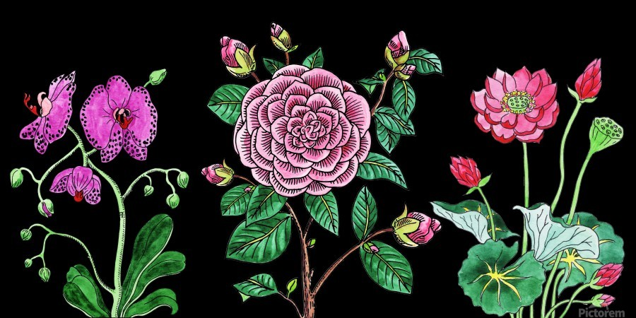 Camellia Orchid Lotus Flowers Watercolor On Black  Print