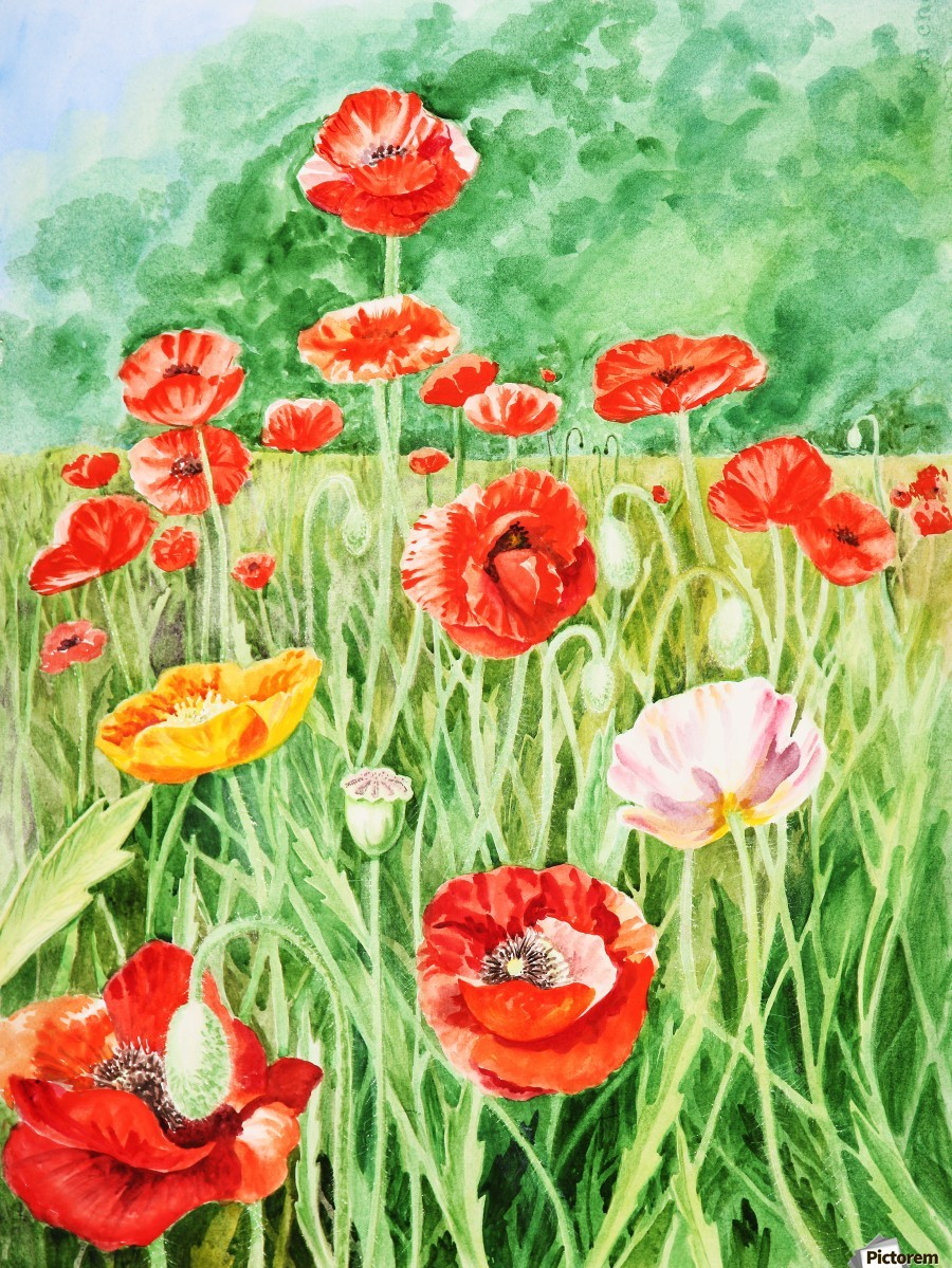 Poppy Field  Print