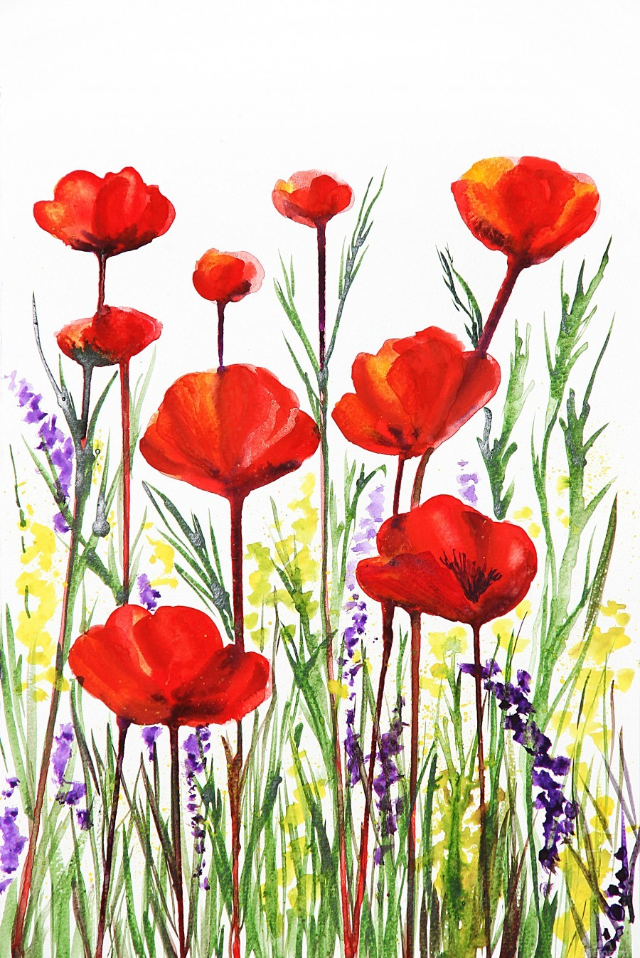Red Poppies And Lavender Field Watercolor  Print