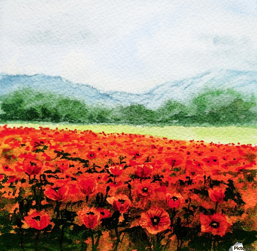 Red Poppies Field  Print