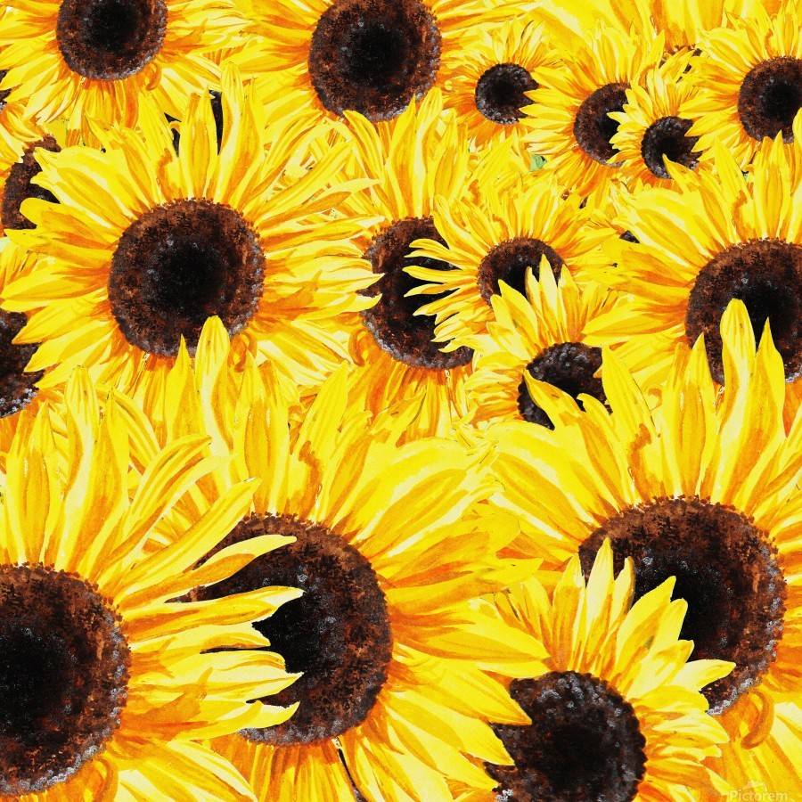 Sunflowers Field Watercolor Painting by Irina Sztukowski  Print