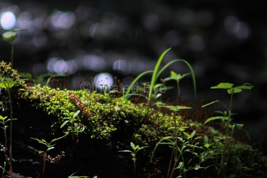 Beautiful Moss  Print
