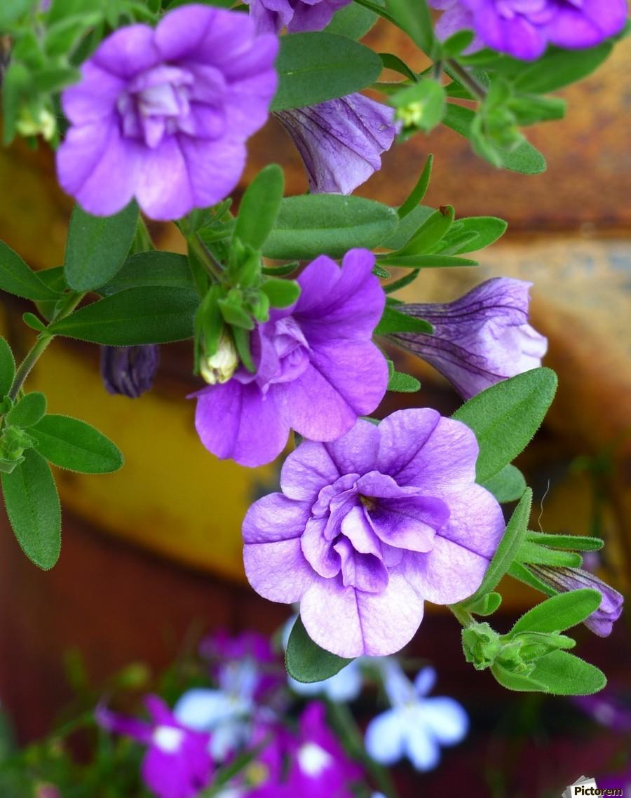 Purple Petals  Print