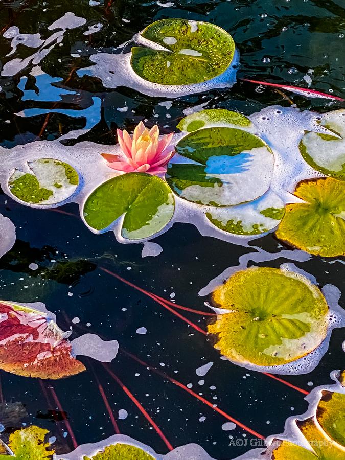 Float Away  Print