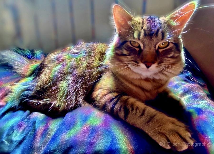 Rainbow Kitten Surprise   Print