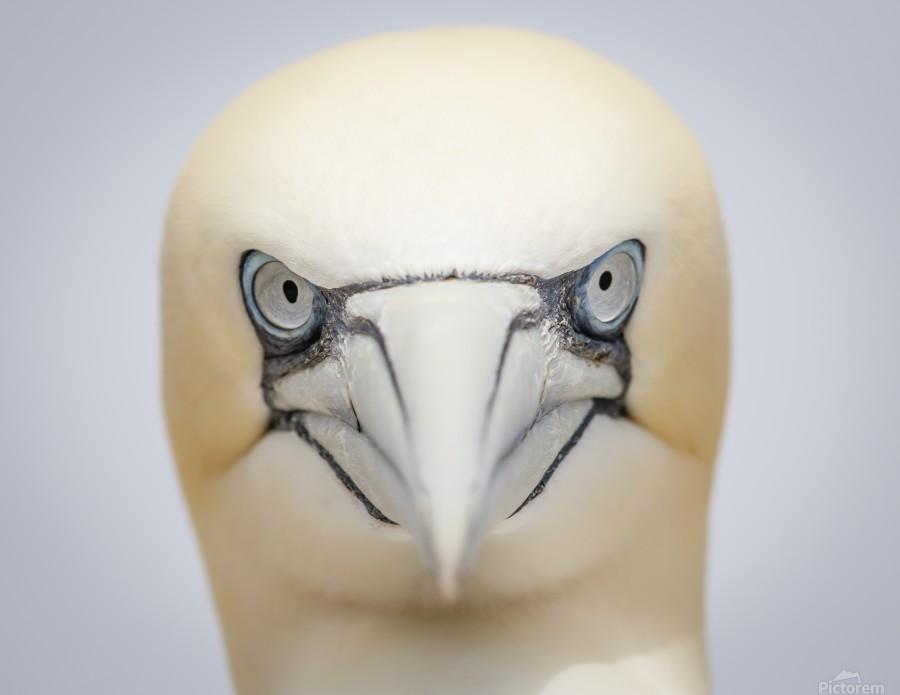 Angry Bird  Print