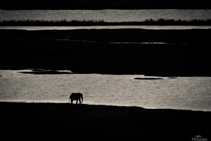 Chobe River Elephant  Print