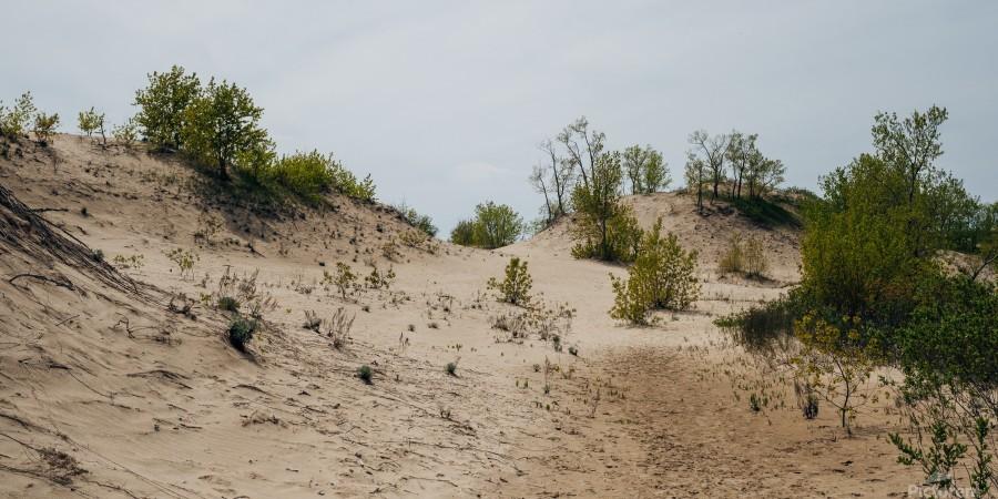 Sandbanks 2  Imprimer