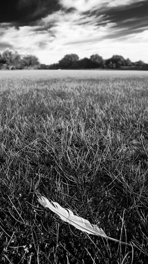 Feather in the Grass  Print