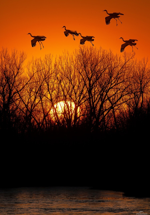 Dawn patrol over the Platte  Print