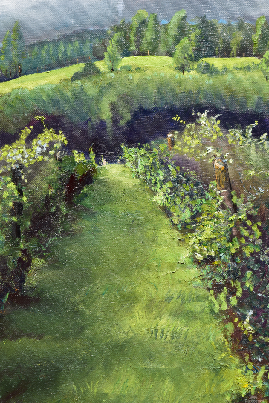 Trilogy of the Vines at Otts - Two of Three  Print