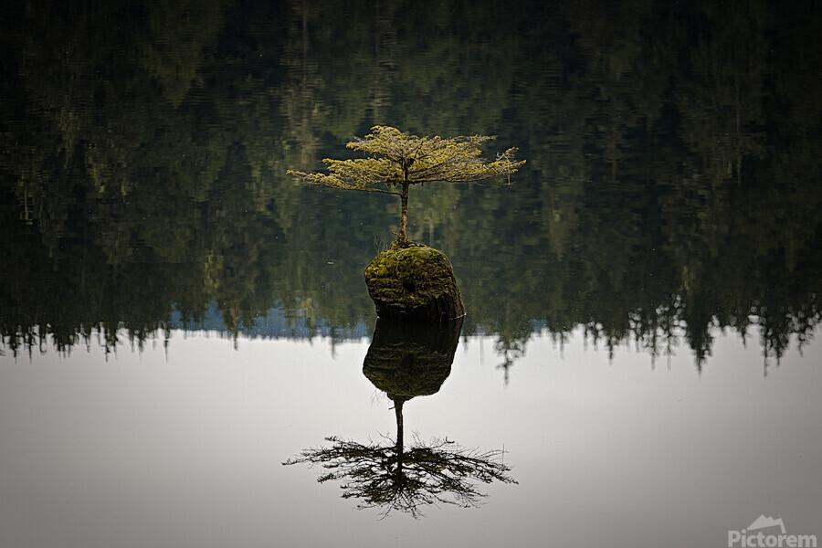 Reflection on a Bonsai Tree  Print