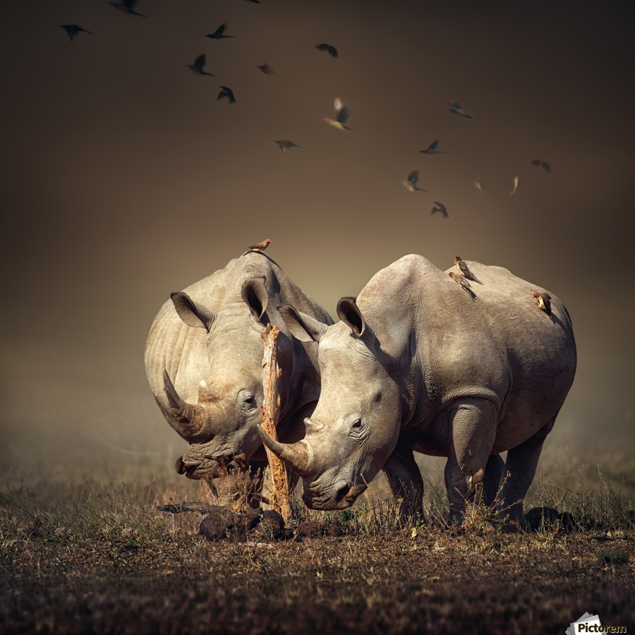 Two Rhinoceros with birds  Print