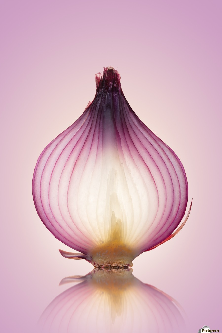 Red Onion Translucent layers  Print