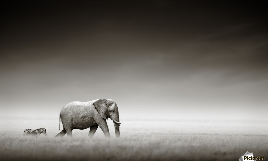 Elephant with zebra (Artistic processing)  Print