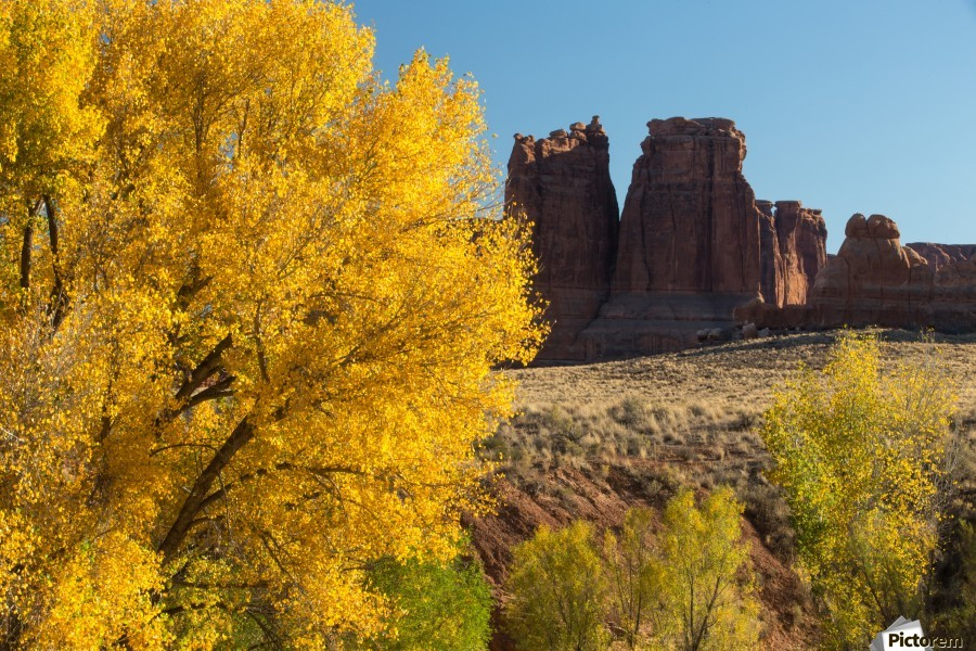 Fall at Courthouse Wash  Print