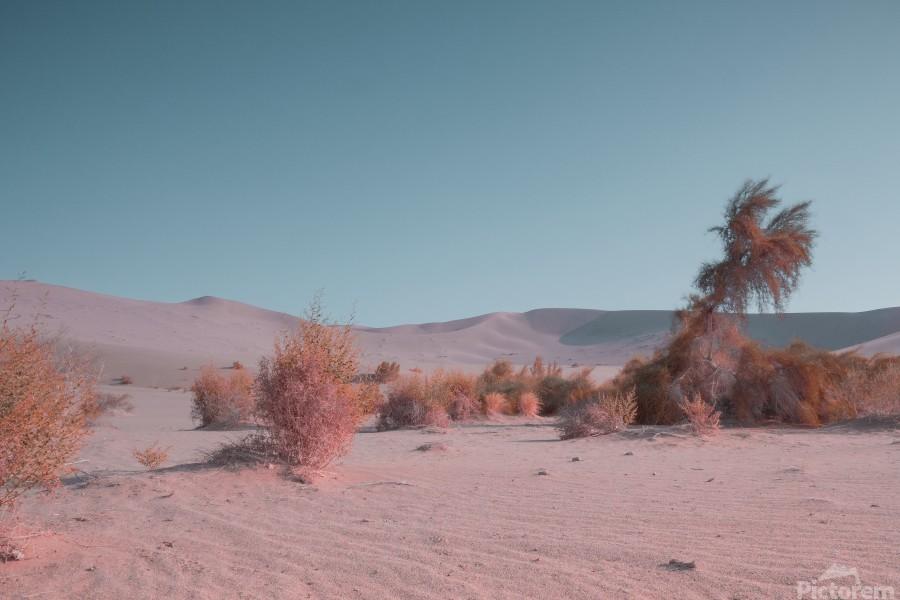 Misty Desert  Print