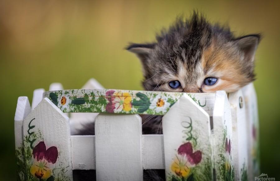 Kitten in basket  Print