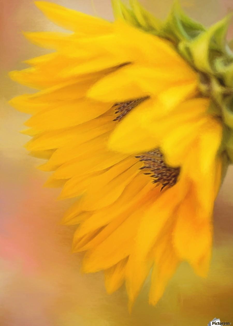 Bring Sunshine - Sunflower Art by Jordan Blackstone  Print