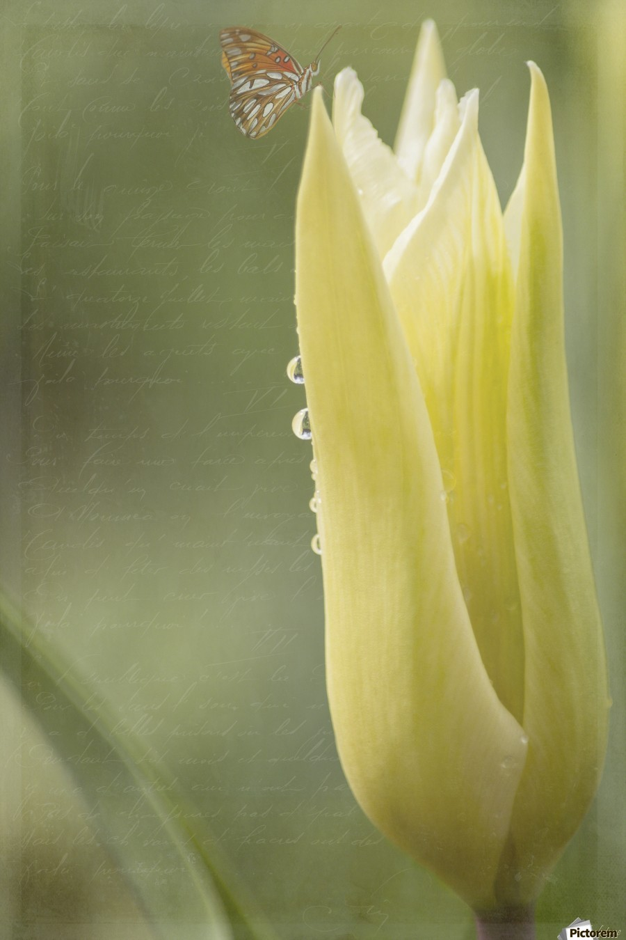 Spirit Of Love - Spring Art by Jordan Blackstone  Print