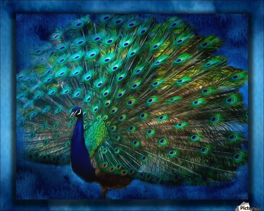 Being Yourself - Peacock Art by Jordan Blackstone  Print